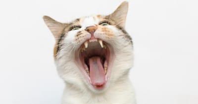 gato mal aliento