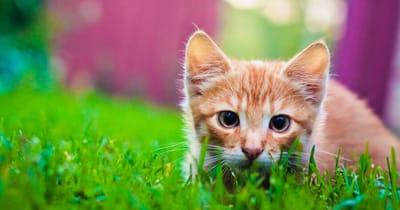 gato jugando en el campo