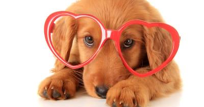 setter con occhiali