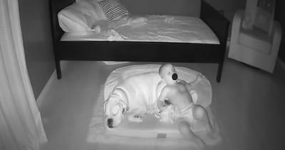niño durmiendo canasta perro