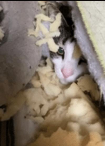 gato en un colchon
