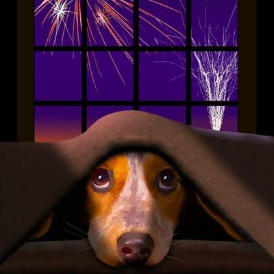 perro miedo cohetes bajo la cama
