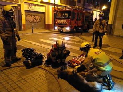 bomberos atienden al perro