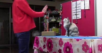gato común imita acciones humanas