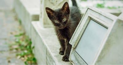gato negro cementerio