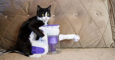 gato aspiradora potente