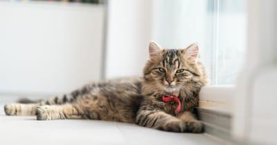 gato casa limpia