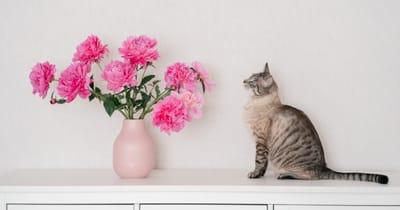 gato mueble alergia