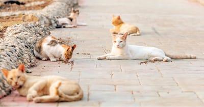 gatos colonia felina estado alarma