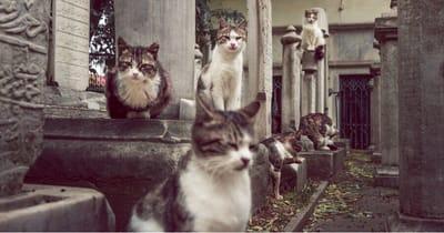 varios gatos entre tumbas cementerio