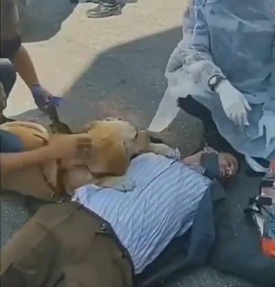 perro sobre su humano en el suelo