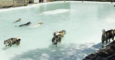 campus madrid piscina perros