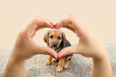 perro rodeado de amor