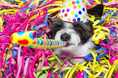 perro celebracion de cumpleaños
