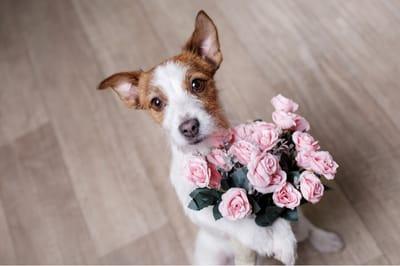 perro con ramo de flores