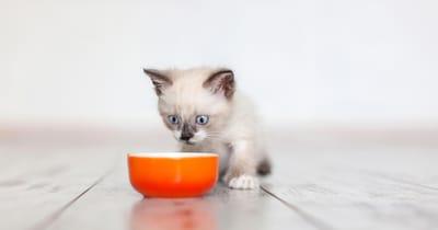 gatito bebe comiendo de un bol