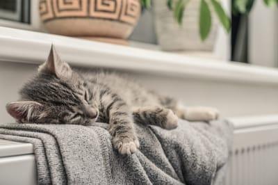 gato radiador calor