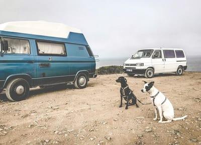 nilosway viajar perro furgoneta