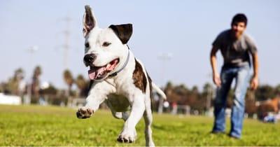 perro juega aire libre