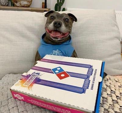 perro con caja de pizza