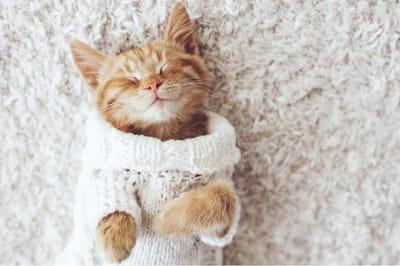 ropa para gato jersey