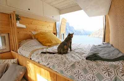 voyages vie van gato perro furgoneta