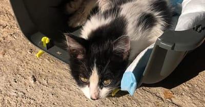 gatito herido dentro de un transportin