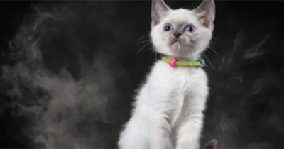 gato humo