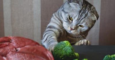 gato comiendo brocoli