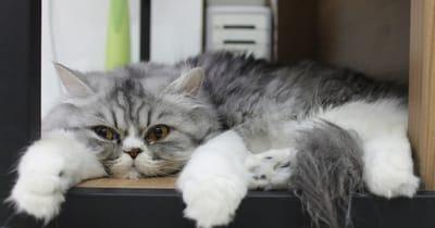 gato aburrido casa