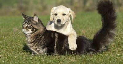 gato con cachorro jardin