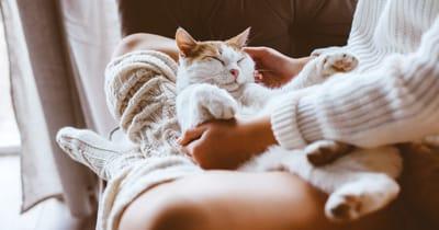 gato durmiendo acurrucado