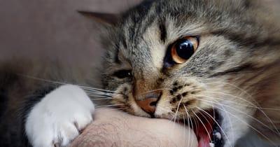 gato mordiscos