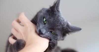 gato muerde por amor