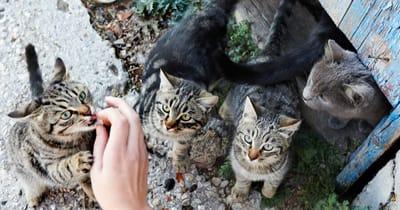 gatos callejeros manada enfermedades
