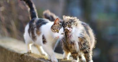 gatos callejeros leucemia