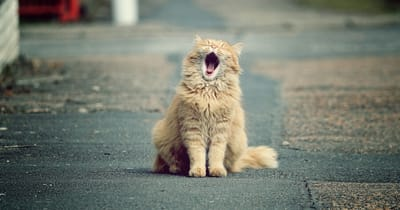 gato anciano calle