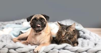 cachorro con gato en casa