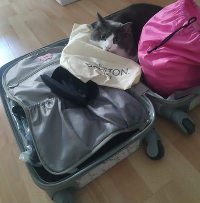 elvis gato dentro de una maleta