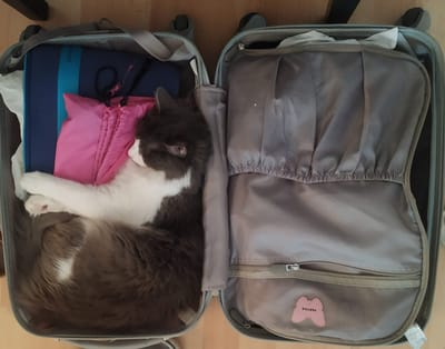 elvis gato durmiendo dentro de una maleta
