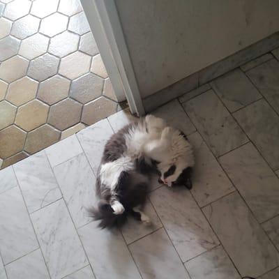 elvis gato jugando en el pasillo