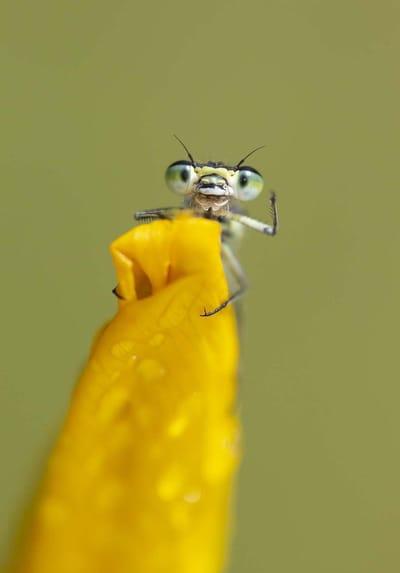 Fotografia divertida de animales hormiga