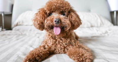 Planes con tu perro hotel madrid