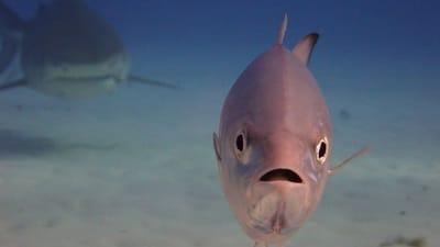 Fotografia divertida de animales pez