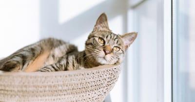 gatto guarda pensoso