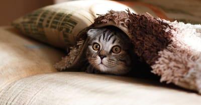 gatto si nasconde sotto una coperta