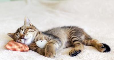 gato durmiendo sobre una alfombra