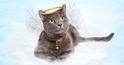 Cat angel waiting in heaven