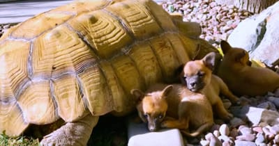 Dogs cuddle under tortoise shell