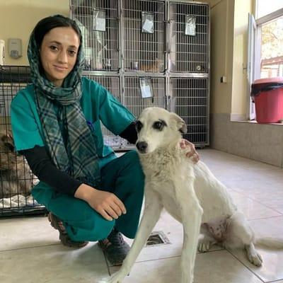 veterinaria in clinica con cane bianco
